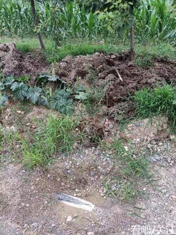 村官涉嫌私卖集体财产和破坏饮水民生工程